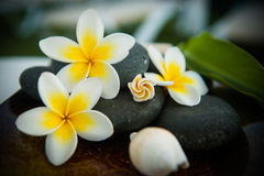 Spa stones with frangipani Stock Photos