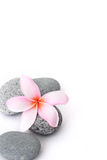 Spa stones with frangipani on white background Stock Images
