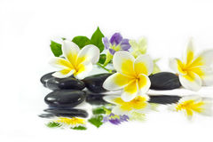 Spa stones and frangipani yellow Stock Photo
