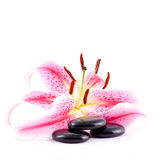 Spa stones and lily Royalty Free Stock Images