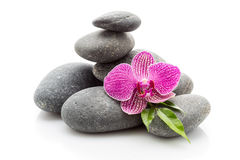 Spa stones. Spa masage stones and orchid isolated on the white background Royalty Free Stock Photos