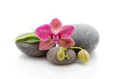 Spa stones Royalty Free Stock Image