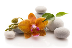 Spa stones. Spa massage stones with orchid. Studio photography Royalty Free Stock Photography
