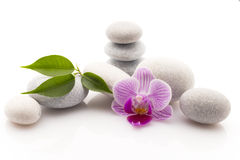 Spa stones. Spa massage stones with orchid. Studio photography Royalty Free Stock Photos