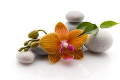 Spa stones. Spa massage stones with orchid. Studio photography Stock Photos