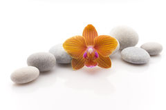 Spa stones. Spa massage stones with orchid. Studio photography Stock Images