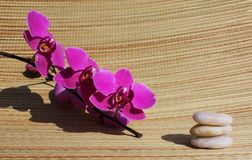 Spa stones orchid Royalty Free Stock Photos