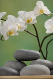 Spa Stones with orchid. Spa stones with white orchid Stock Photography