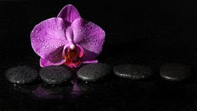 Spa stones and orchid on a dark background with drops of water, copy space for your text Royalty Free Stock Image