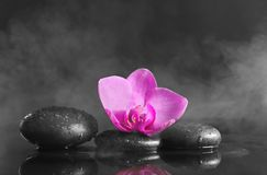 Spa stones with orchid flowe. R on dark background Stock Photos
