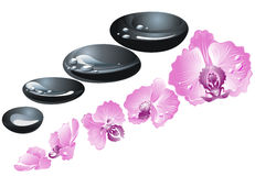 Spa stones with orchid flower Stock Images