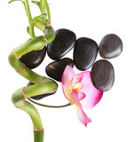 Spa stones with orchid flower and beautiful green bamboo isolated Royalty Free Stock Image