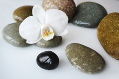 Spa stones and orchid flower. Spa stones and beautiful white orchid flower Stock Photos