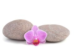 Spa Stones and Orchid flower Stock Photography