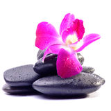 Spa Stones and Orchid flowers Royalty Free Stock Photos