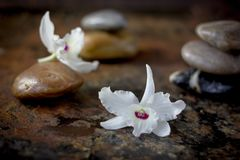Spa stones and orchid flowers on dark background. Spa stones and orchid flowers on dark background stock image