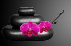 Spa Stones and Orchid Flowers over Black Royalty Free Stock Images