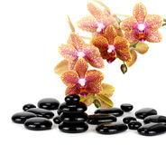 Spa Stones and Orchid flowers over white Royalty Free Stock Photos
