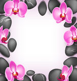 Spa stones with orchids flowers like frame on pink background Stock Images