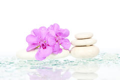 Spa stones and pink flower Royalty Free Stock Images