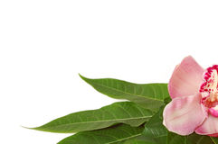 Spa stones with pink orchid royalty free stock image