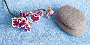 Spa stones and pink orchid Stock Photo