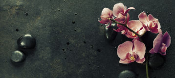 Spa stones and pink orchid on the dark background Stock Images