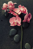 Spa stones and pink orchid on the dark background Stock Image