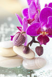 Spa stones and pink orchid Royalty Free Stock Images