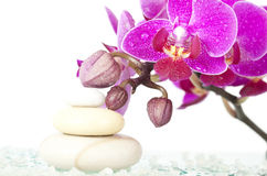 Spa stones and pink orchid Stock Photography