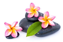 Spa stones and plumeria Royalty Free Stock Image