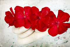 Spa stones and red flower Stock Image