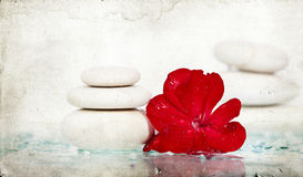 Spa stones and red flower Stock Photos
