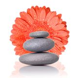 Spa stones with red gerbera Royalty Free Stock Photography