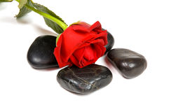 Spa stones with red rose. Over white background royalty free stock photos
