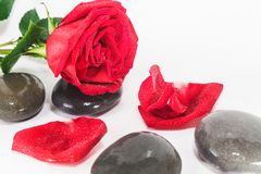 SPA stones and red rose Stock Photos