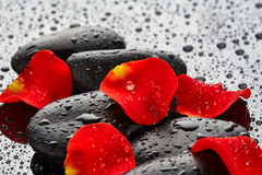 Spa stones with rose petals Royalty Free Stock Image