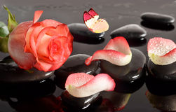Spa stones and rose petals and butterfly over black background Royalty Free Stock Photo