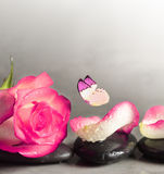Spa stones and rose petals and butterfly over grey background Stock Photos