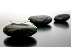 Spa stones in a row with white petal. On the front one stock photo