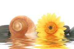 Spa stones, seashell and daisy Stock Image