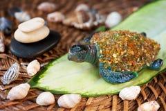 Spa stones, seashells and turtle. Royalty Free Stock Photo