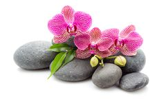 Spa stones. Spa masage stones and orchid isolated on the white background stock photography