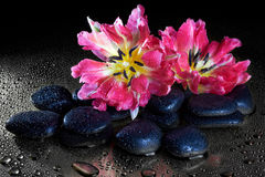 Spa stones and tulip flowers with reflection Stock Images