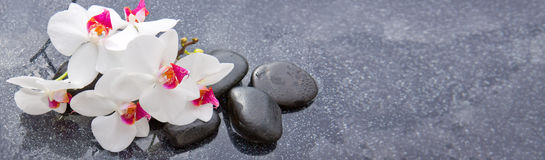 Spa stones and white orchid on gray background. Royalty Free Stock Photo