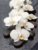 Spa stones and white orchid on gray background. Stock Image