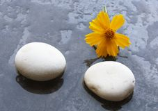 Spa stones and yellow flower. On wet granite Stock Photos