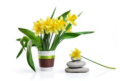 Spa stones and yellow flowers background Royalty Free Stock Photo