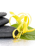 Spa stones and Ylang-Ylang flower Stock Photo