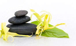 Spa stones and Ylang-Ylang flower Stock Photos